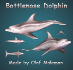 Dolphinpreview.jpg